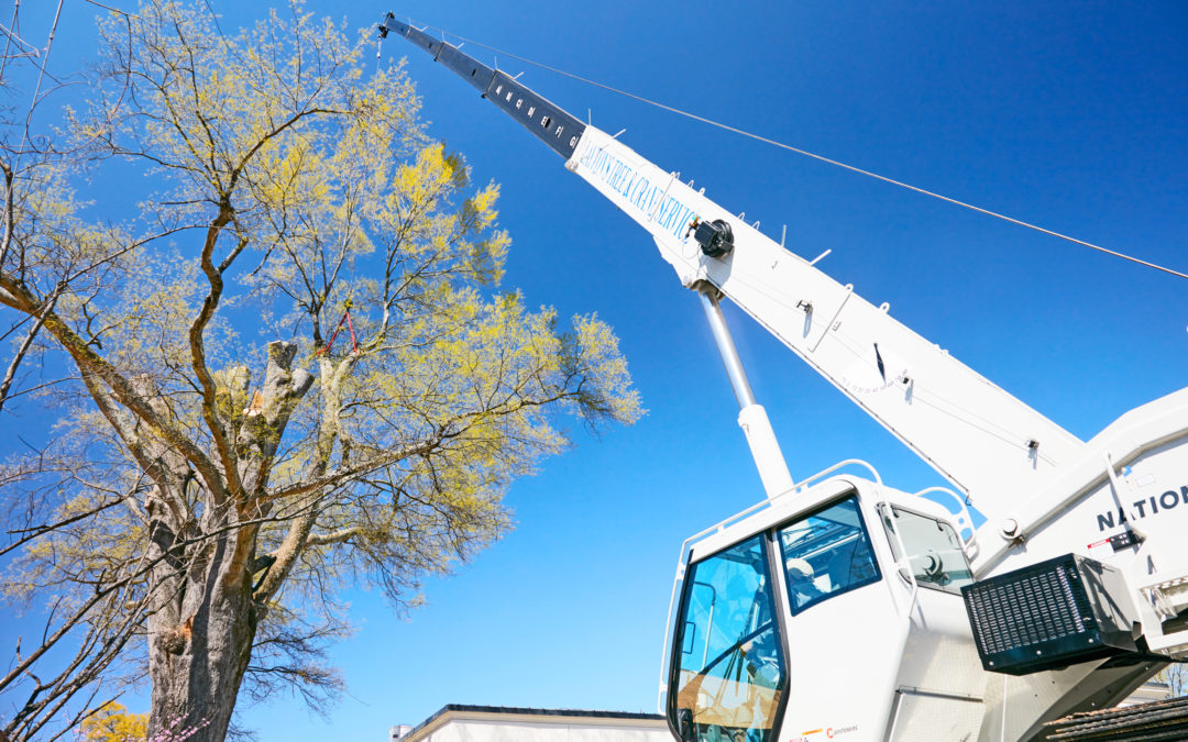 National Crane NBT55 proves an ideal solution for Layton's Tree Service